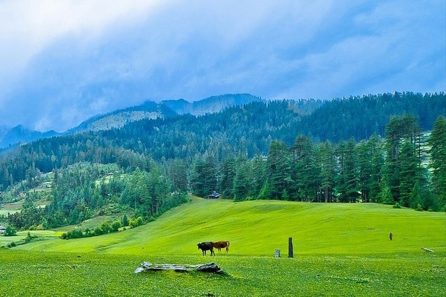 Hotels in Himachal Pradesh
